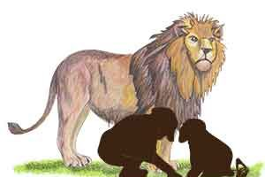 Learning Lions