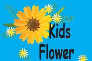 Mount Lorne Flower Flies